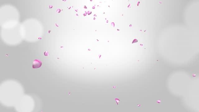 Pink romantic falling petals of sakura or cherry. Looped 4K motion spring blossom graphic green screen.
