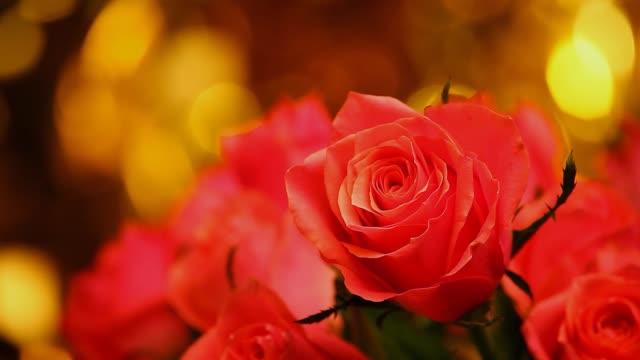 vídeos de stock, filmes e b-roll de bokeh ouro rosa rosa - punhado