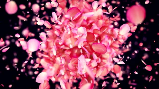 Pink Rose Petals exploding in 4K