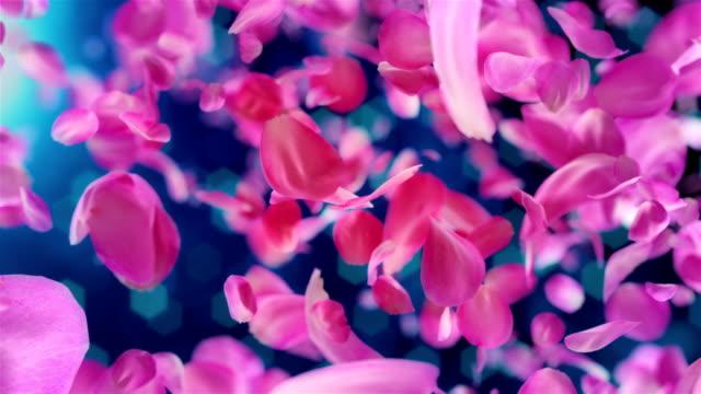 vídeos de stock, filmes e b-roll de pétalas rosas caindo fundo loopable em 4k - estampa floral