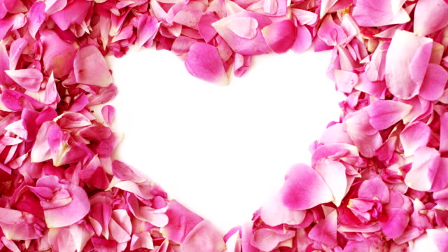 Pink rose petals make a heart shape for Valentines Day, stop motion animation