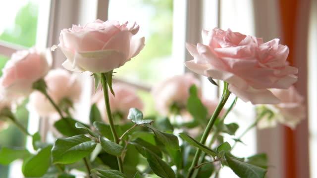 vídeos de stock e filmes b-roll de pink rose. - living room background