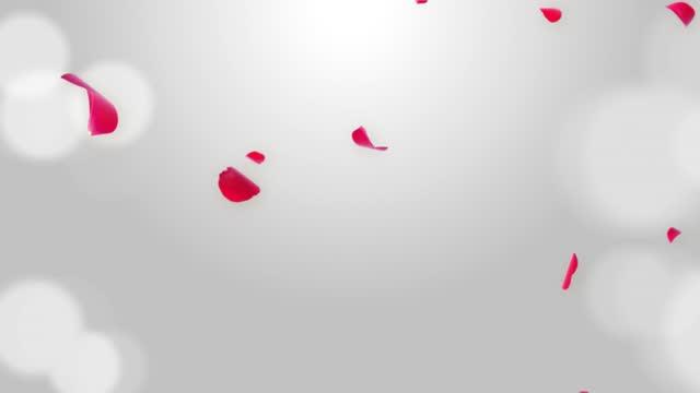 Pink sakura Falling Petals Loop Background 3D Green Screen.