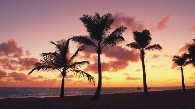 vidéos et rushes de coucher du soleil rose sur la plage de l'océan atlantique - arbre tropical