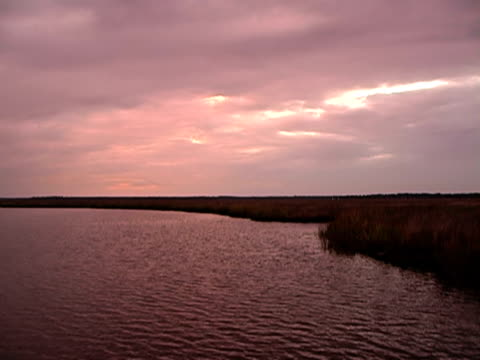 pink sunset - moss stock videos & royalty-free footage