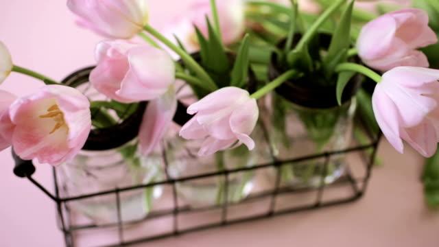 rosa tulpaner - konserveringsburk bildbanksvideor och videomaterial från bakom kulisserna