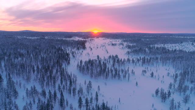 antenn: rosa vinter solnedgången bakom vita pinjeskog täckt av snö - pink sunrise bildbanksvideor och videomaterial från bakom kulisserna