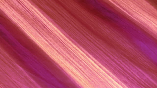 Pinkish cotton fabric blowing in the wind, background video