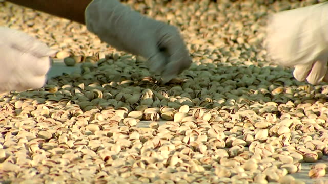 Pistachio nuts production line. Part 3 of 5 video
