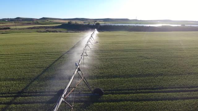 vidéos et rushes de pivote regando el campo de maíz - arroser