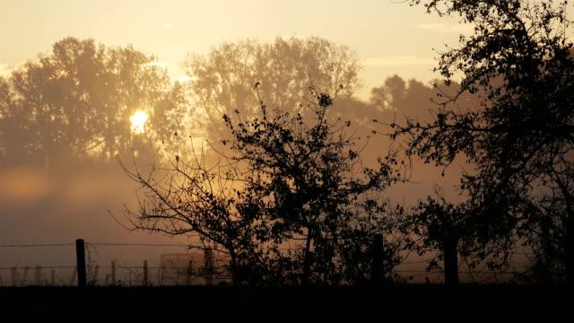 places of world war one in belgium: plugstreet wood fall misty sunrise - i wojna światowa filmów i materiałów b-roll