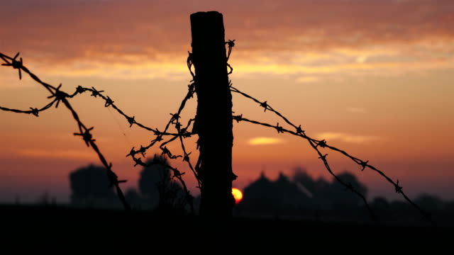 places of world war one in belgium: plugstreet wood, reconstructed trenches with bunker and barbed wire at sunrise - wojna filmów i materiałów b-roll