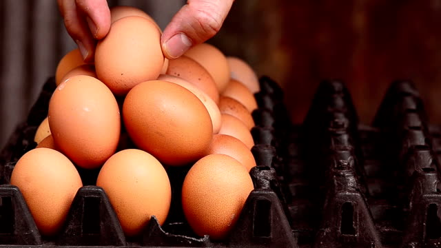 placing egg into a carton video