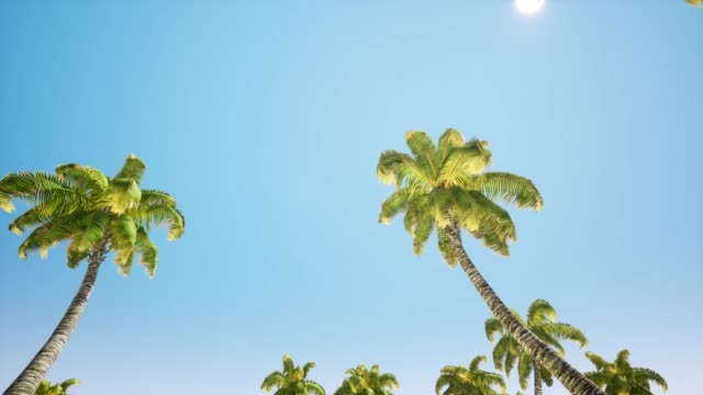 Plane is landing. Flying low over the ocean. In foreground trees palms near water. 4k