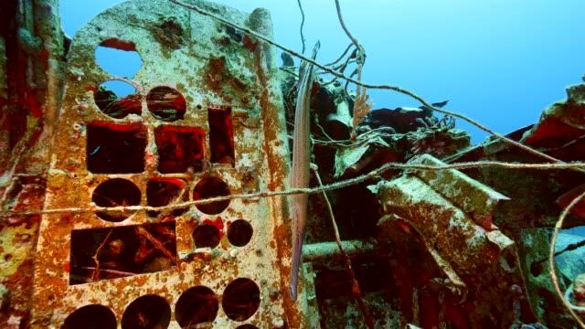 Flugzeugwrack als Teil der Korallenriffe in der Karibik auf Curacao mit blauem Hintergrund – Video