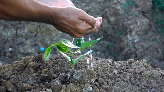 Plant a tree Video format Planting a tree,watering plants,Slow motion. sowing stock videos & royalty-free footage