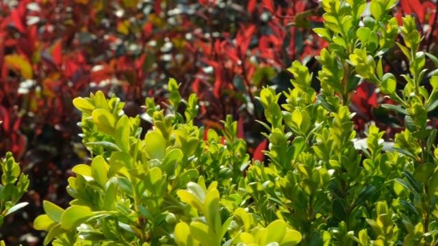 plant background - cespuglio tropicale video stock e b–roll