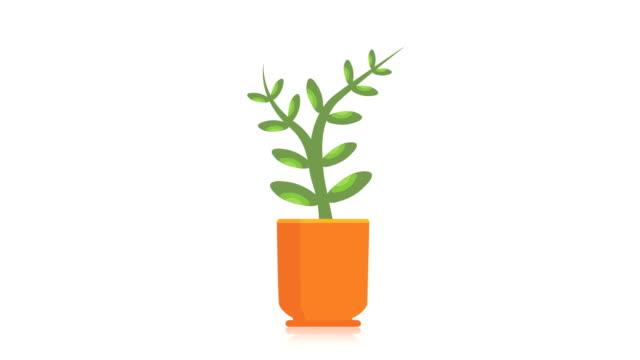 plant, flower, flowerpot, natural, alpha luma matte. - побег стоковые видео и кадры b-roll