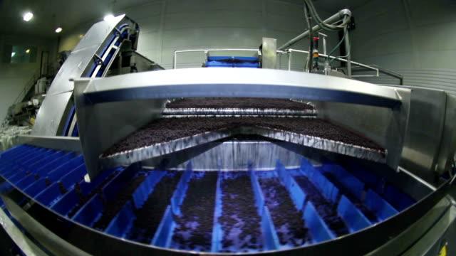 vídeos y material grabado en eventos de stock de planta para el procesamiento de bayas silvestres, cosecha de arándanos. - arándano