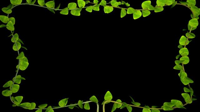 성장 하는 잎 식물 프레임입니다. 알파 채널 - 아이비 스톡 비디오 및 b-롤 화면
