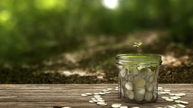 plant growing from money jar. concept of financial investment. - risparmi video stock e b–roll
