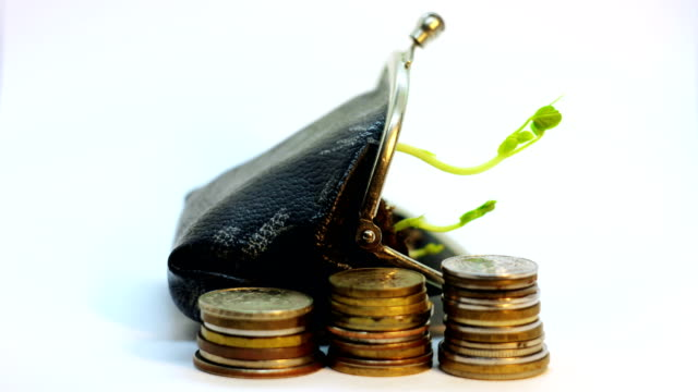 plant growing from the wallet purce, money growth concept, isolated on white, time lapse