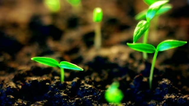 時間経過で生育する植物、春の発芽。小さな芽が太陽に回転する。明るい飽和色 - 苗点の映像素材/bロール