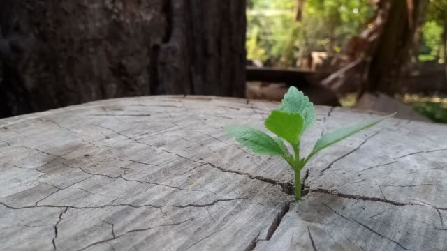 Plant growing through of trunk of tree stump Plant growing through of trunk of tree stump wood texture stock videos & royalty-free footage