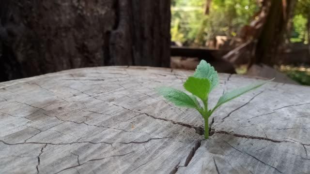 vidéos et rushes de plante poussant à travers du tronc de souche d'arbre - bois texture