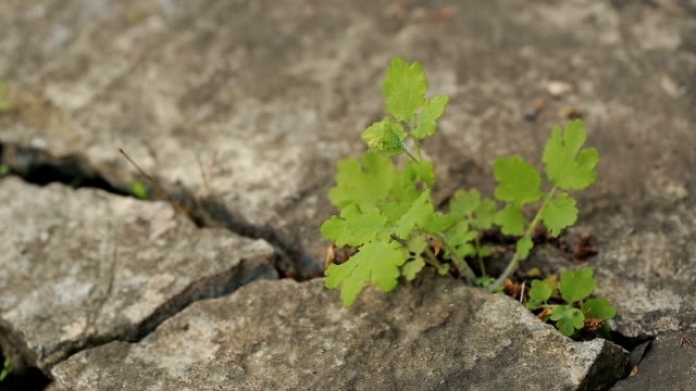 Plant growing through the crack of the concrete video
