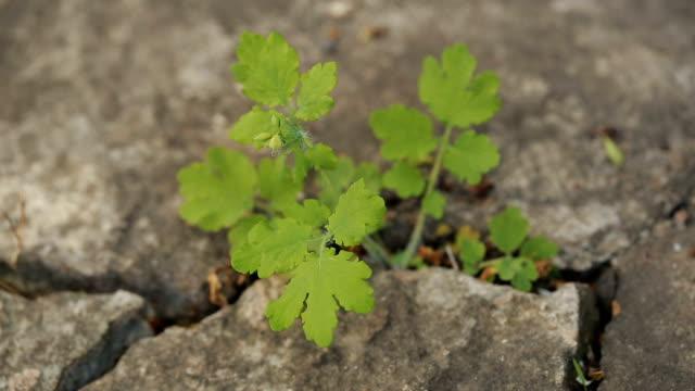 pflanze wächst durch die ritzen der asphaltstraße - asphalt stock-videos und b-roll-filmmaterial