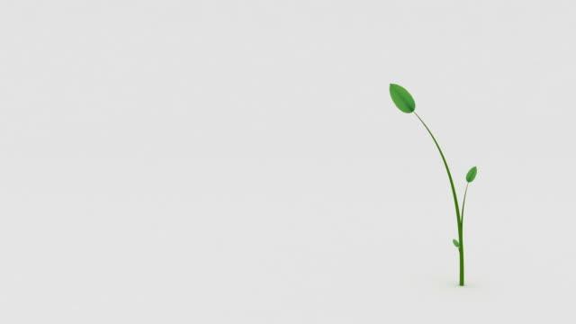 Plant growth HD