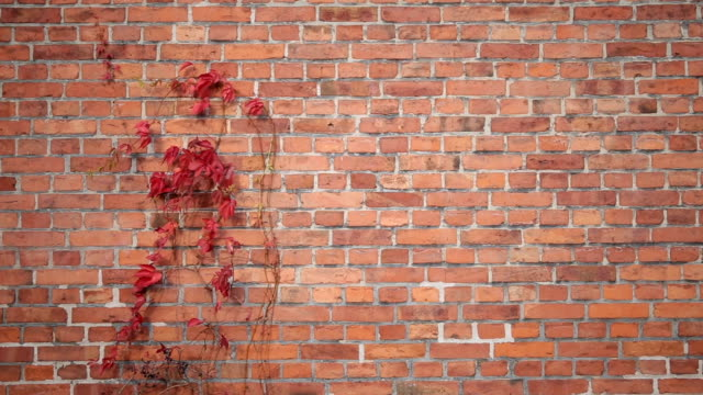 Plant on the brick wall moved by the wind video