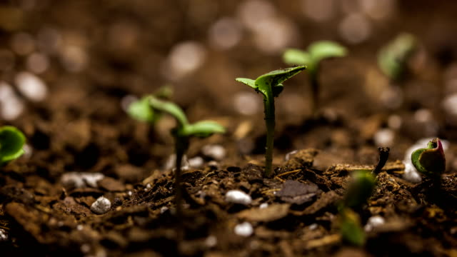 Plant Seed Time Lapse Springtime Growing video