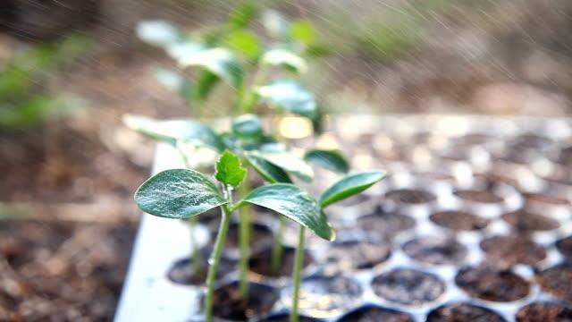 Plant seedlings growing on fertile soil.