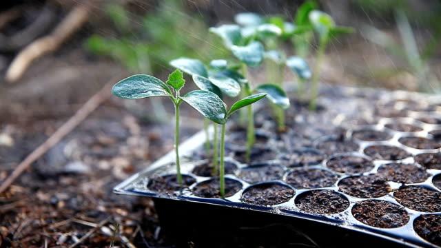 Plant seedlings growing on fertile soil. - vídeo