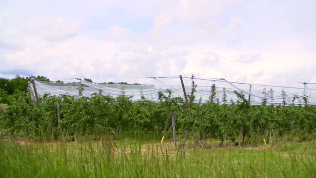 Plantation in France video