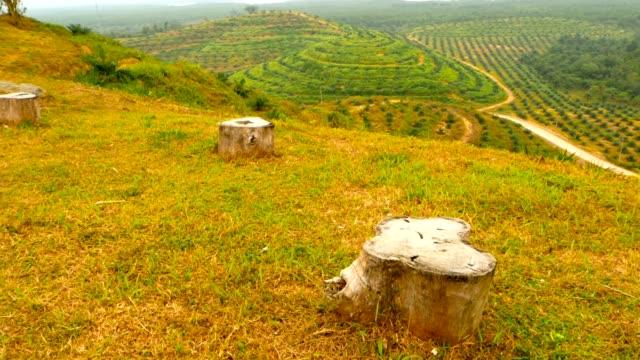 vídeos de stock, filmes e b-roll de plantações de óleo de palma linhas de árvore são vistas de cima. paisagem tropical. - plantação