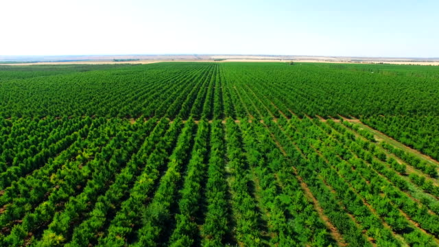 aerial: plantations with orchards - orticoltura video stock e b–roll