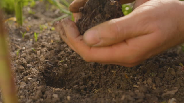 Planting a Beautiful Seedling Hands putting a young plant into soil in a home garden. Close-up shot of planting. Ecology concept. New life concept. earth day stock videos & royalty-free footage