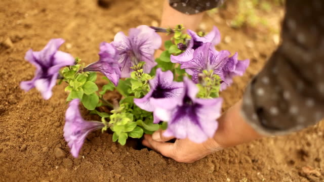 planting a new flower, gardening video