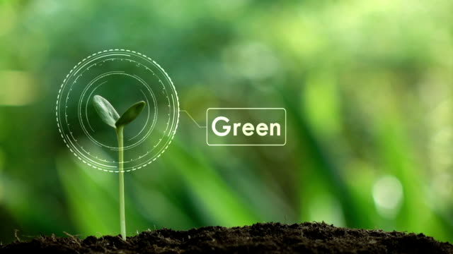 vídeos de stock e filmes b-roll de planting a tree and green hologram for save the earth and natural , clean ecology in natural. - comida sustentavel
