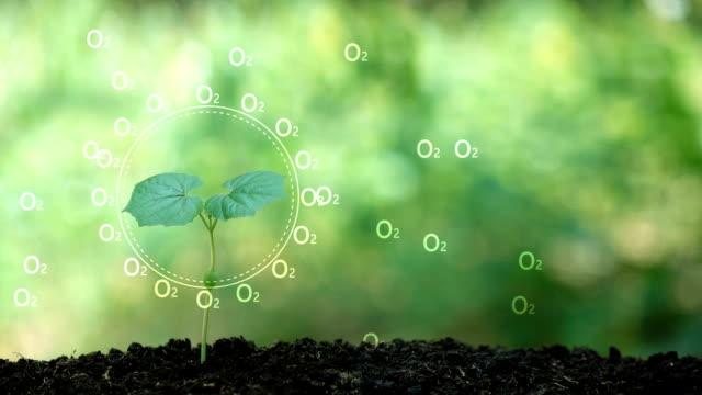 Ein Baum und Sauerstoff Hologramm für save the Earth und natürlichen, sauberen Ökologie Pflanzen in natürlichen. – Video