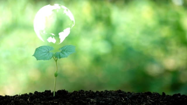 Pflanzung eines Baumes und die Erde Drehung Hologramm für save the Earth und natürlichen, sauberen Ökologie in natürlichen. – Video
