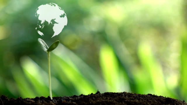 planting a tree and the earth rotation hologram for save the earth and natural , clean ecology in natural. - sustainability video stock e b–roll