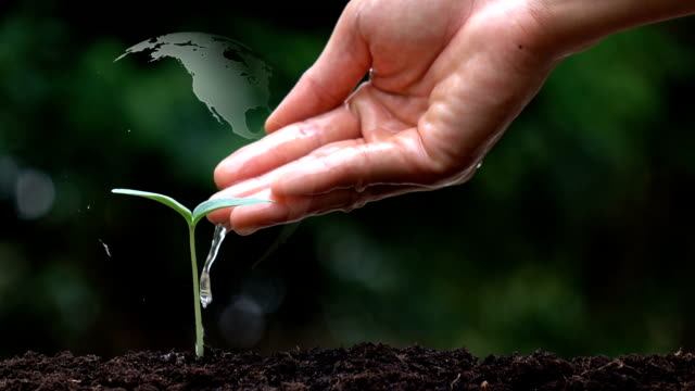 vídeos de stock e filmes b-roll de planting a tree and the earth rotation hologram for save the earth and natural , clean ecology in natural. - green world