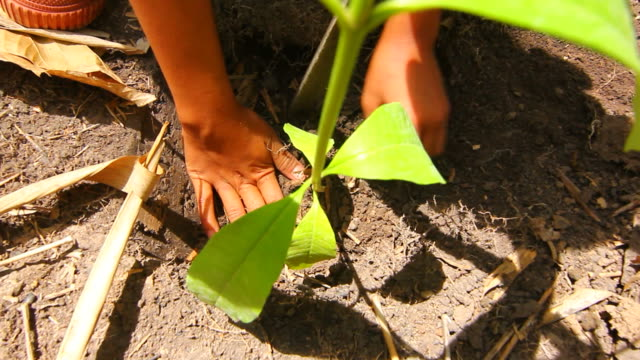 Planting a tree forest video