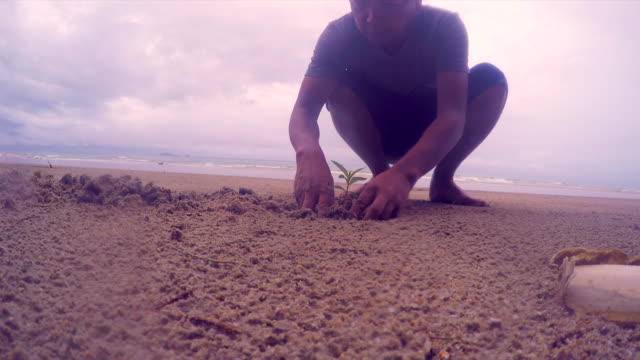 Planting a tree on the beach - Stock video