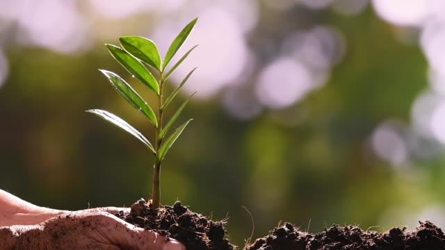 planting a tree - slow motion - побег стоковые видео и кадры b-roll