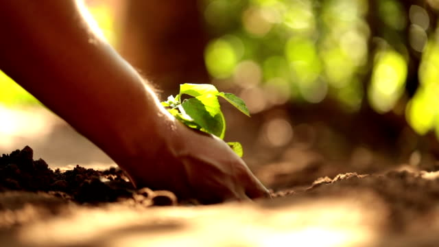 Planting a tree, Slow motion video